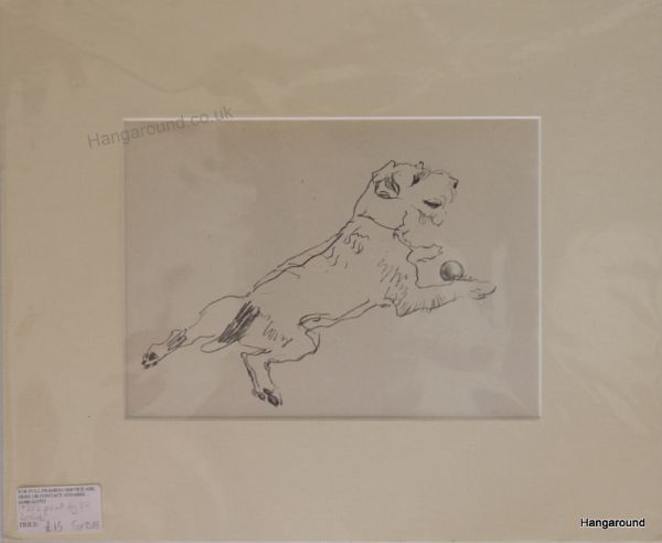 Little Terrier - lying on his tummy with a ball , 1930's print by Lucy Dawson- Ter D18